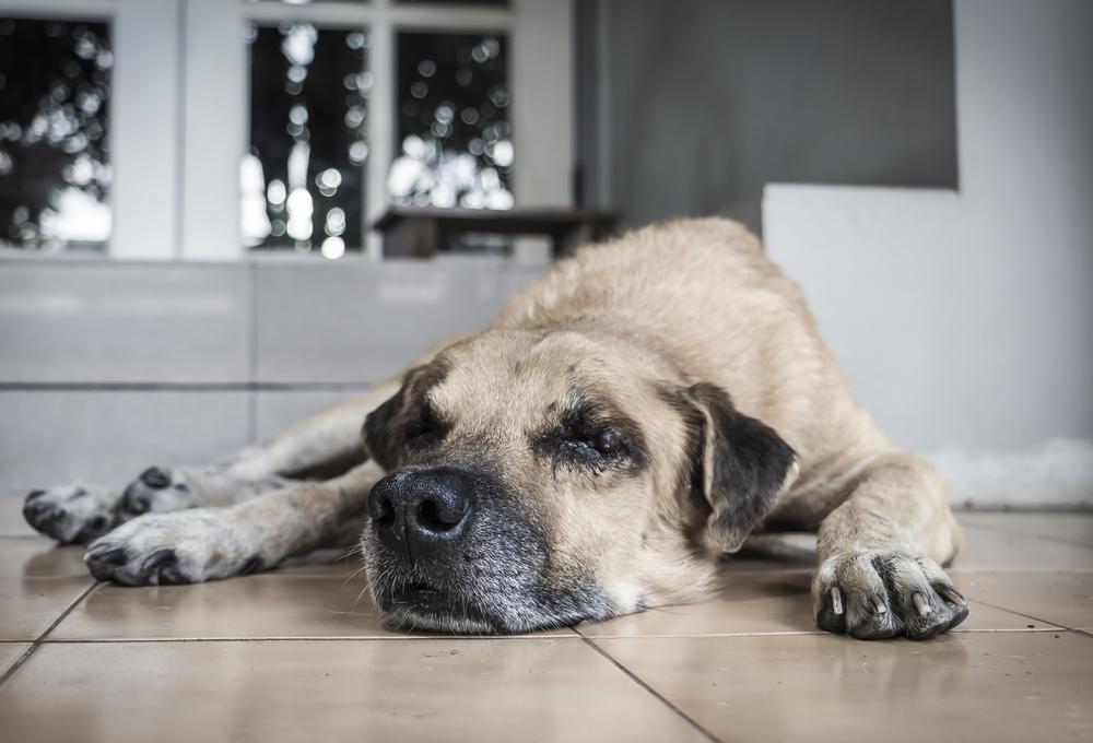 ない 老 犬 余命 食べ